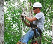 Arborist climbing tree